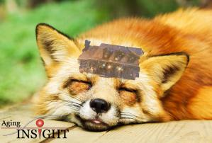 fox-american-dream