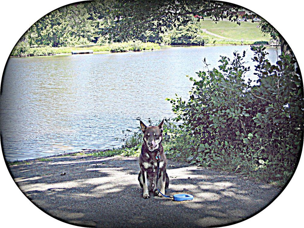 We Miss You, Kochi-Dog (4/6)