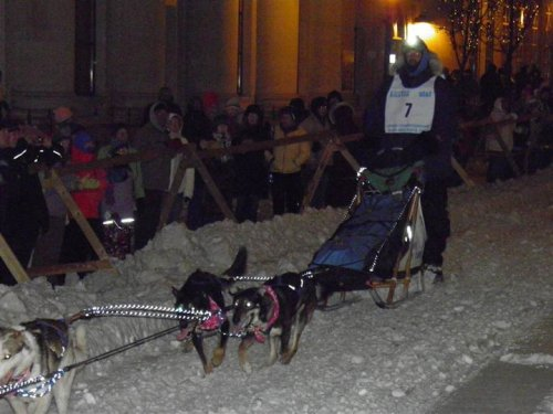 The Start of the UP200 Sled Dog Race in downtown Marquette, Michigan