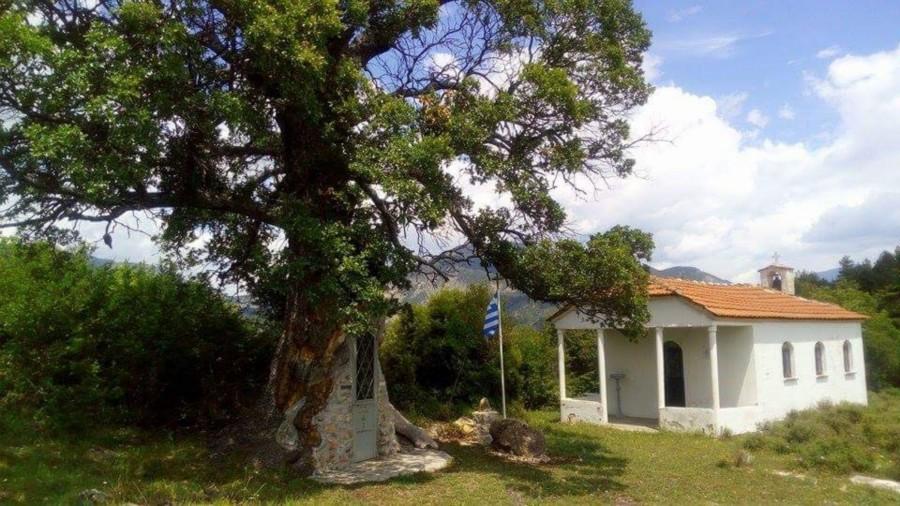Το δέντρο…που μετατράπηκε σε εκκλησιά του Άγιου Παϊσίου!