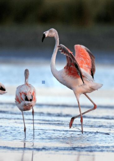 Liminar suspende nomeação da Chefe do Parque Nacional da Lagoa do Peixe