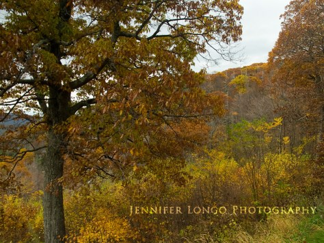 Skyline Drive in the Fall