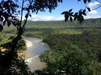 The Amazon Rainforest in Ecuador
