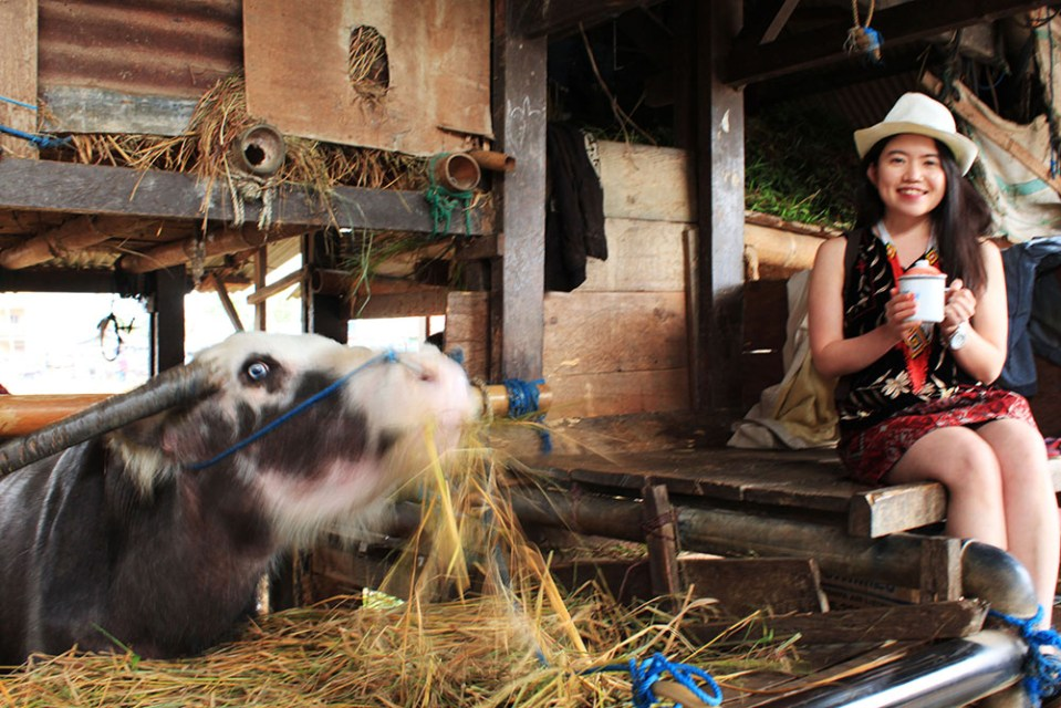 wanderlust as cowgirl in toraja the road less traveled