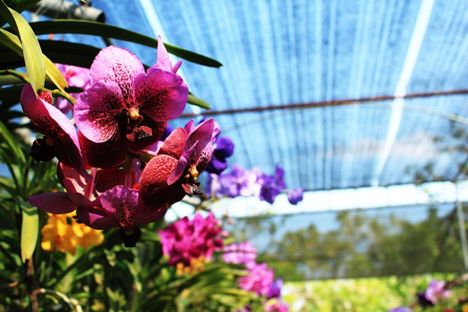 Bai Orchid and Butterfly Farm Chiang Mai Thailand