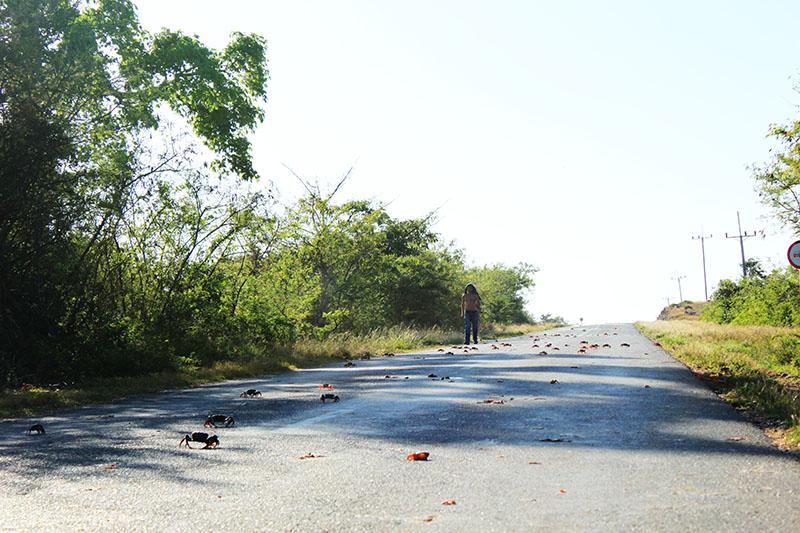 people stand in the middle road cienfuegos trinidad cuba crab migration