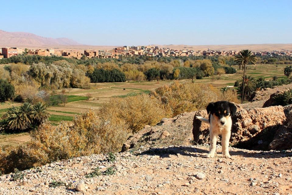 dog with valley of thousand kasbahs morocco background sunny day blue sky agirlnamedclara
