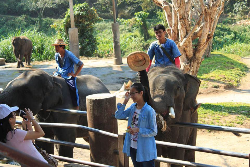 elephant takes hat off female tourist who poses for photo at elephant show chiang mai agirlnamedclara