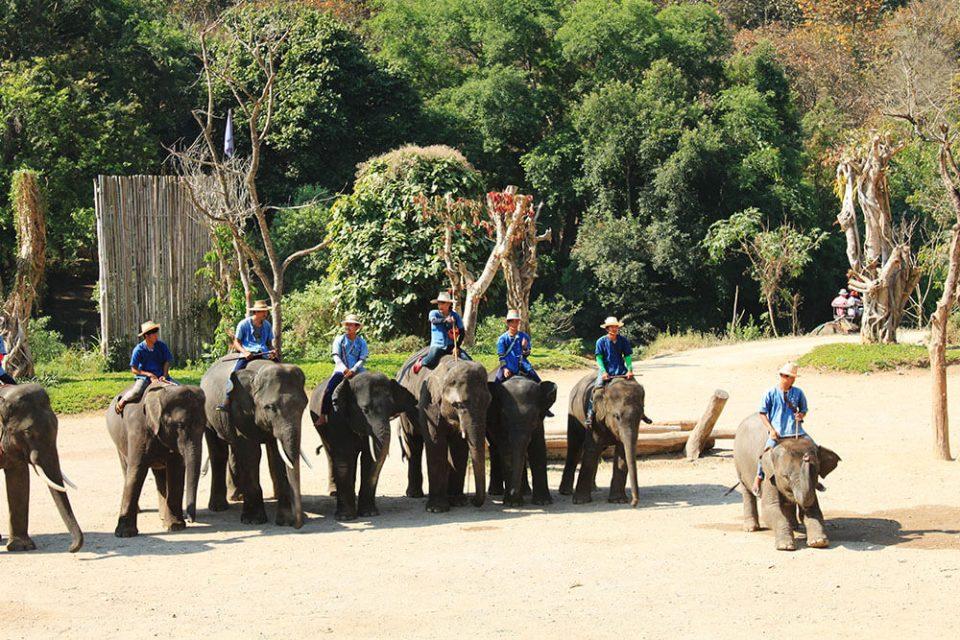elephant show baby elephant greet tourist bows downchiang mai agirlnamedclara