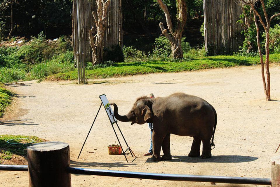 elephant paints tree elephant show chiang mai thailand sunny day agirlnamedclara