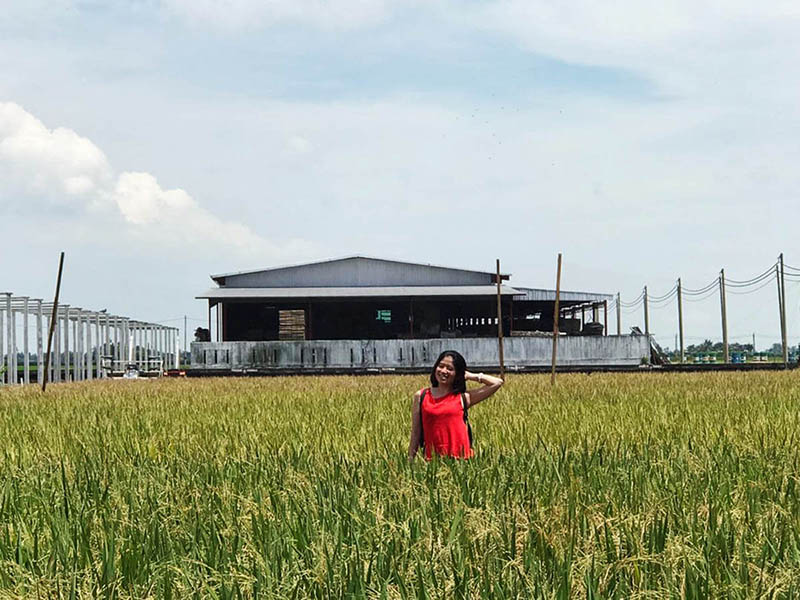 asian girl red top smile stand in the middle paddy field sekinchan lps rice mill factory agirlnamedclara