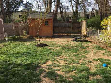 backyard in 2018