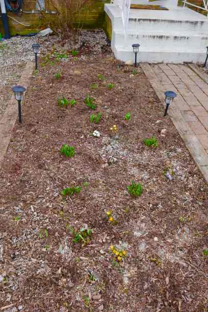 front garden bed with bulbs blooming