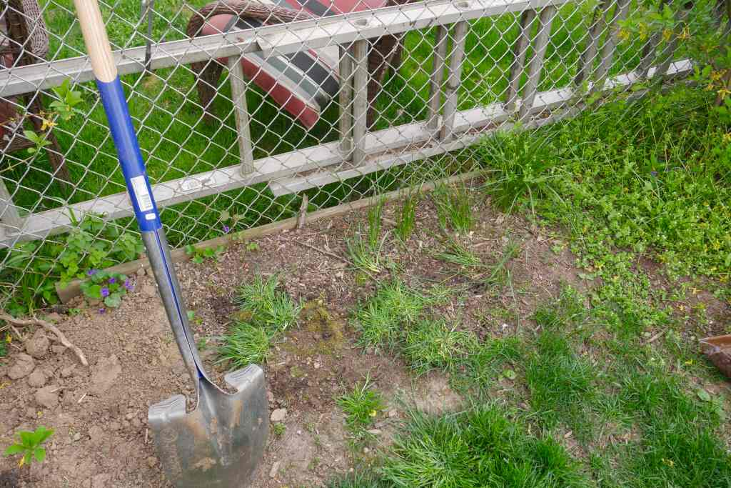garden needing weeding