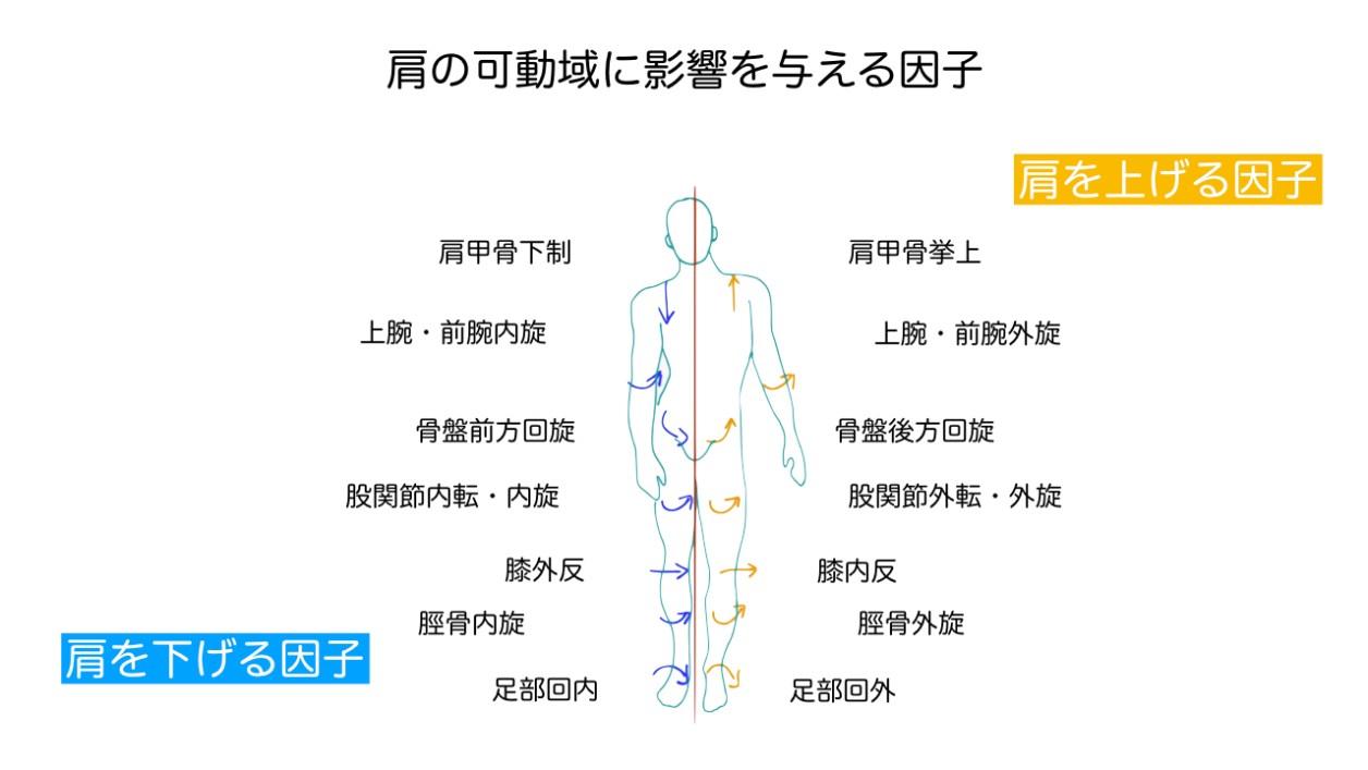 足関節の状態と足の長さの関連.005