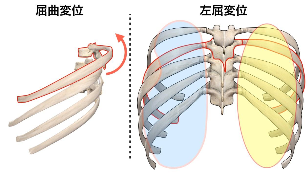 呼吸 肋骨(胸椎)の変位