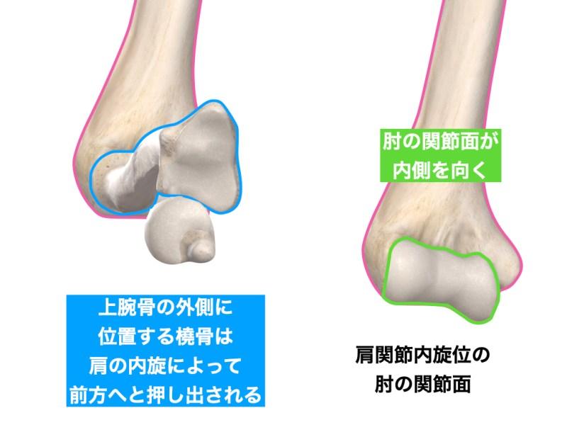 肘の回内位と肩の内旋