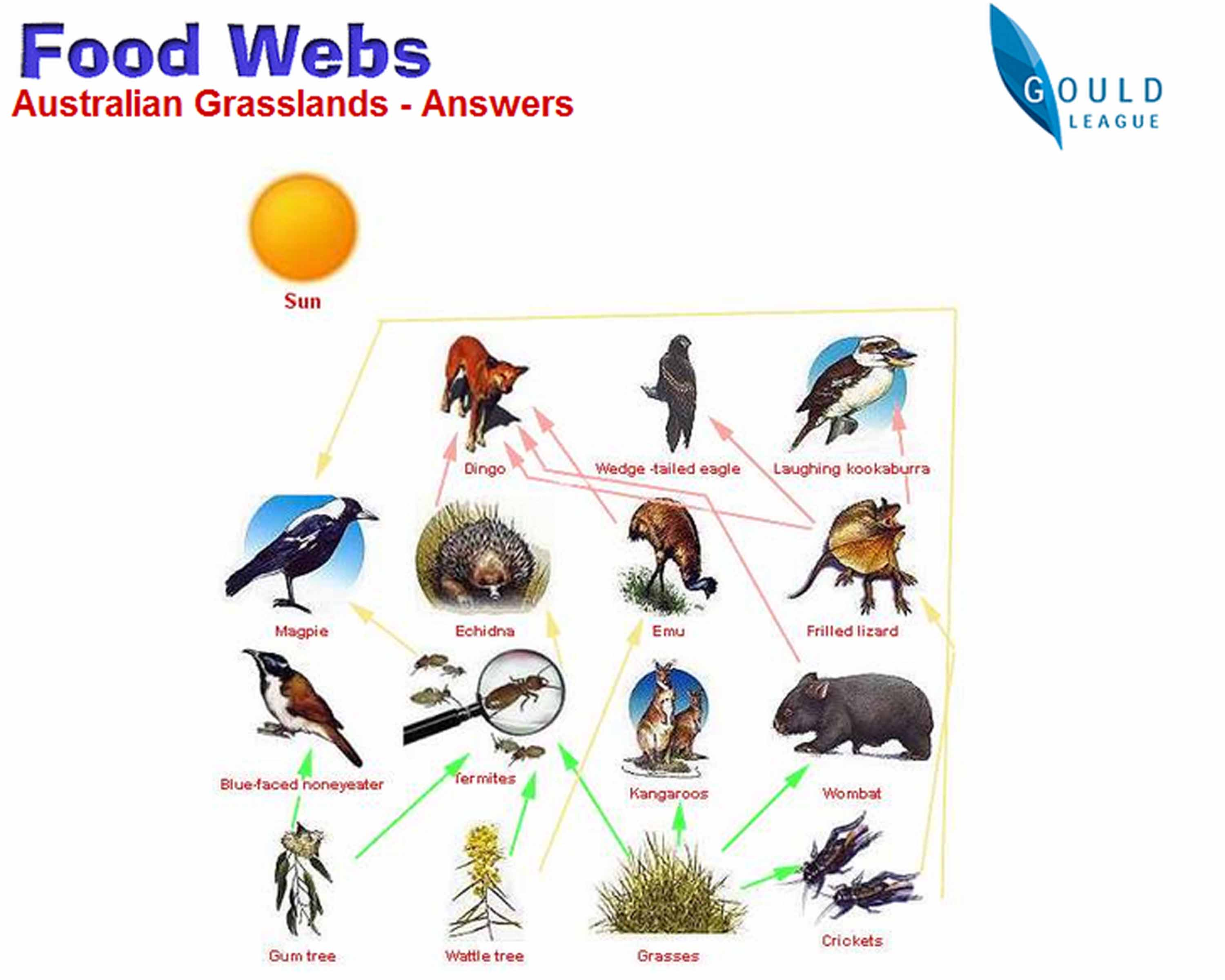 Post 6 Food Webs