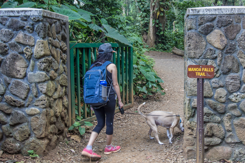 Manoa Falls Hike On Oahu Hawaii A Global Stroll