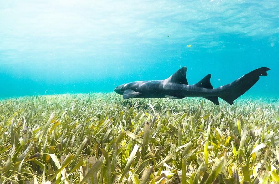 Belize Caveman Snorkeling Tours