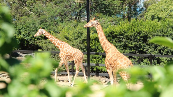 Is Taronga Zoo worth the admission price?