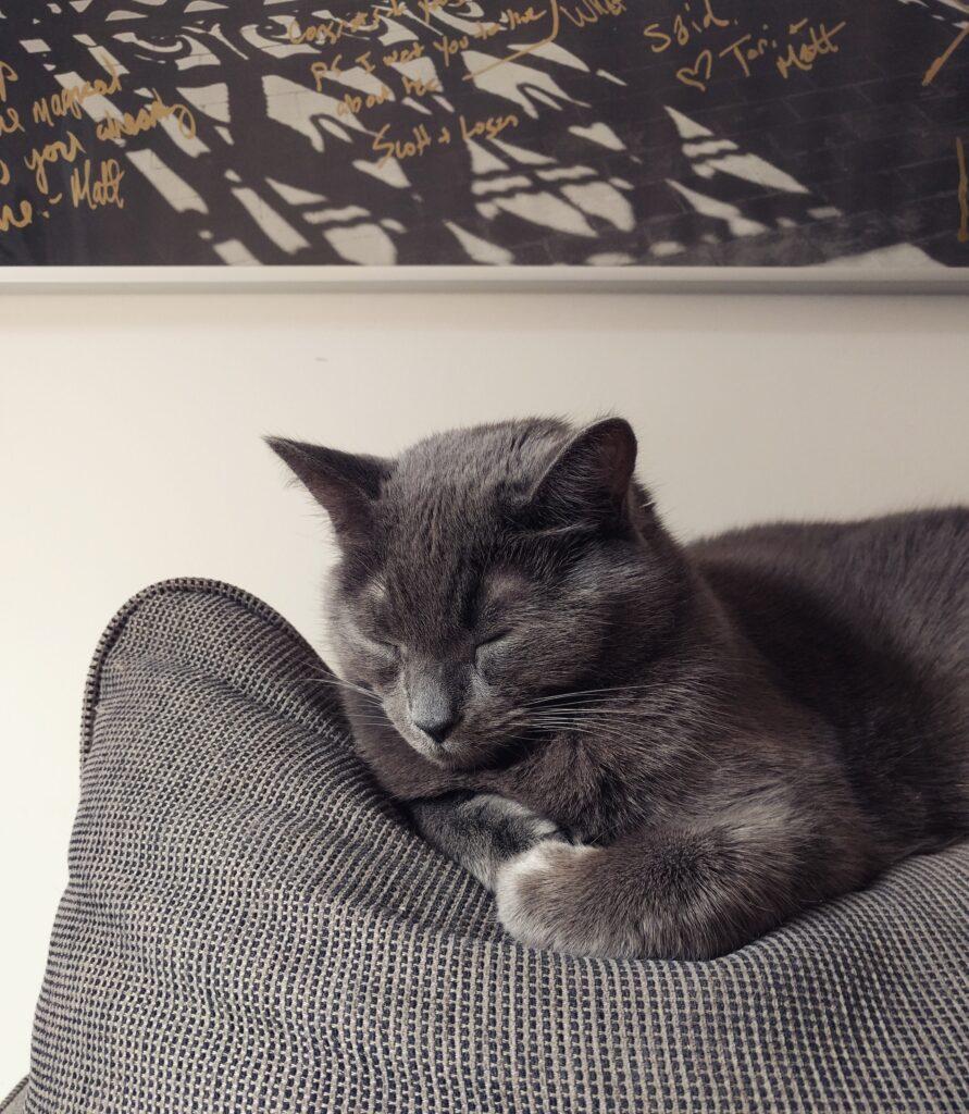 Cat smartphone photo