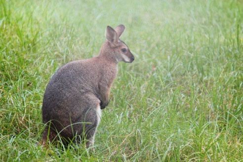 Awesome Australian animals and where to find them