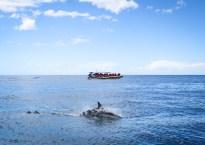 8 amazing experiences to have on the Tasman Peninsula