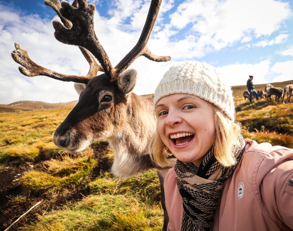 Reindeer in Scotland, Cairngorms National Park