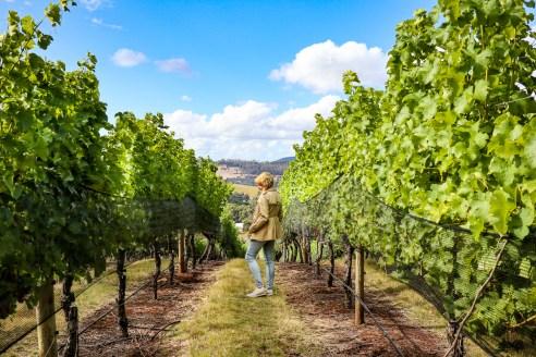 Tamar Ridge Winery, Launceston, Tasmania