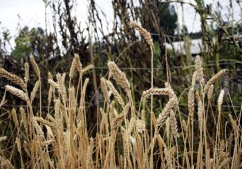 Positive outlook for winter crops