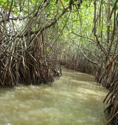 hutan mangrove [ 3072 x 2304 Pixel ]