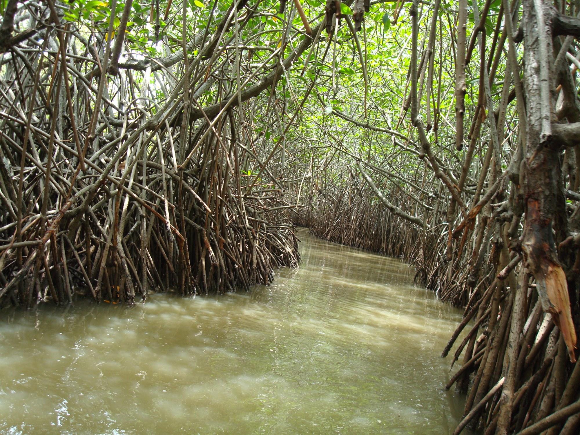 hight resolution of hutan mangrove