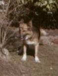 basil-dog