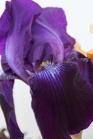 Sculptural-iris