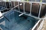 Sanger High Ag 2012 aquaculture experiment