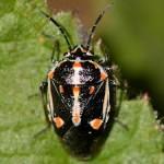 01-02-bug