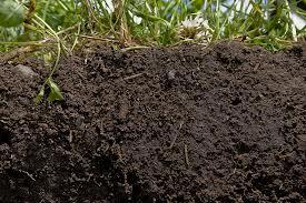 California Soils Week