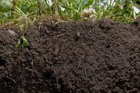 01-23-13-soil
