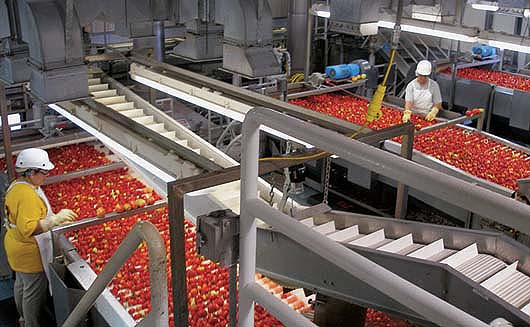 2017 California Processing Tomato Report, tomatoes, food processing