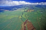 Aerial View of Sugar Fields, Maui, Hawaii