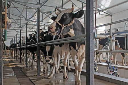 milking robots