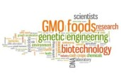 Genetically modified food (GMO foods)
