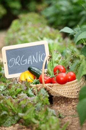 organic vegetables-food