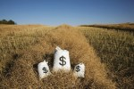 Bags Of Money On A Farm Field-groups