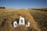 Bags Of Money On A Farm Field farm income