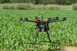 Drone hovering over young corn plantation