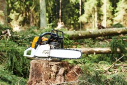 chainsaw on cut wood in forest