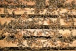 bee hive-ccd