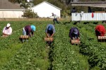 Agriculture Labor